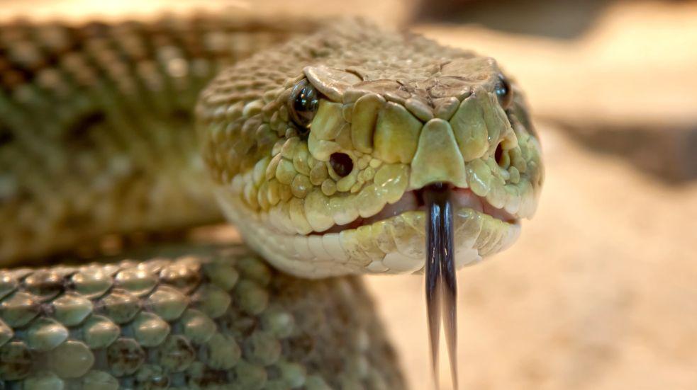 Nejjedovatější hadi na světě
