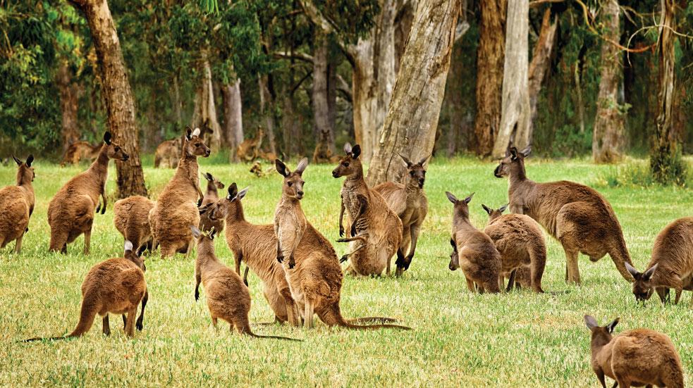 Zajímavosti Austrálie