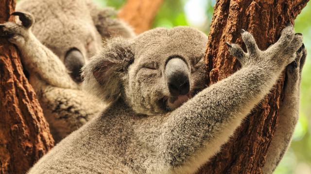 Austrálie - zvířata