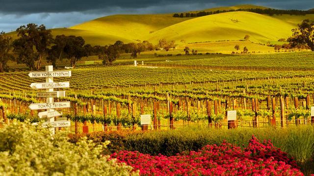 Víno a vinařství Austrálie