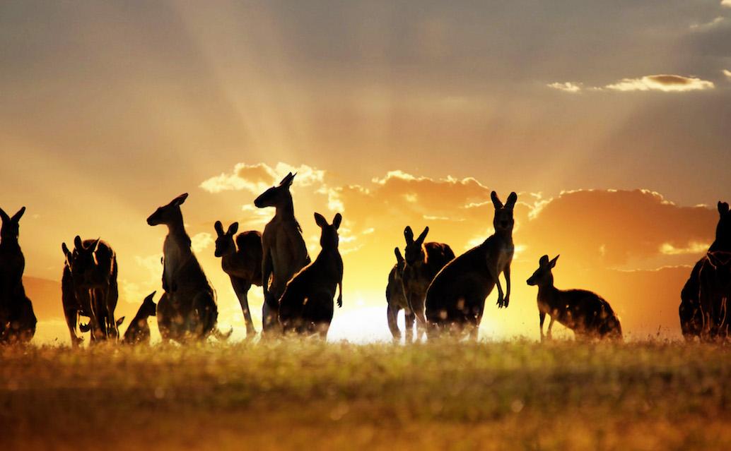 Zájezd pouště a pralesy Austrálie