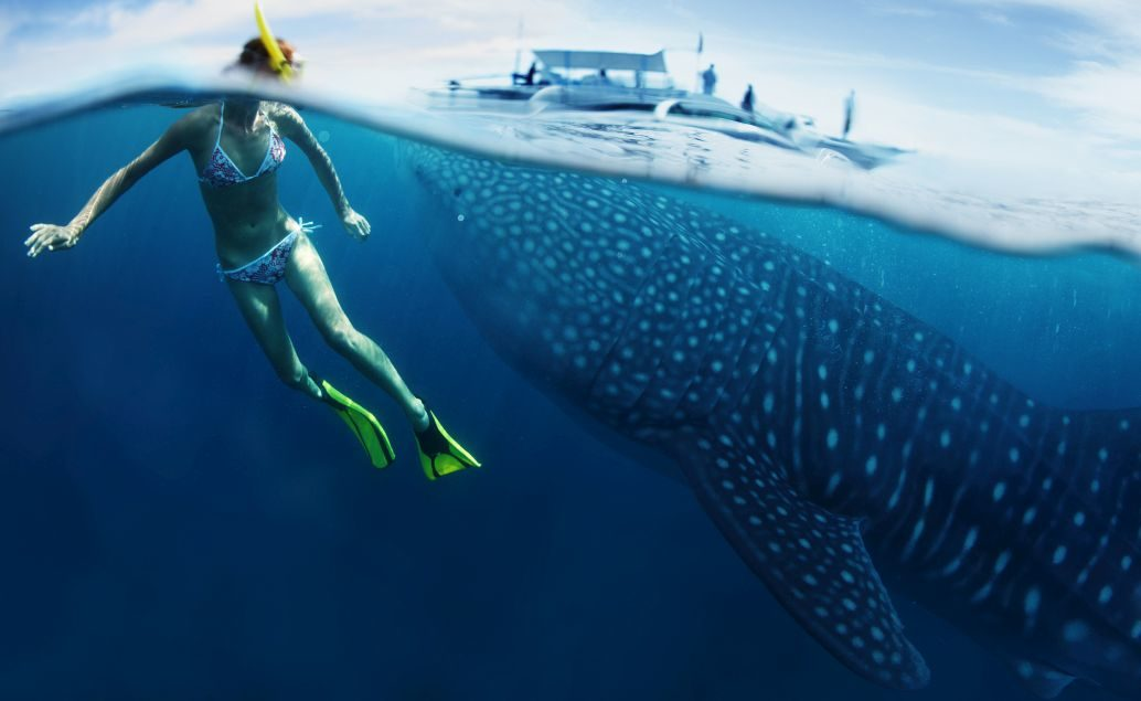 Zájezd Setkání se žralokem velrybím