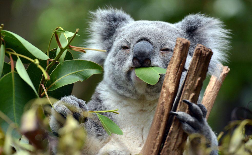 Zájezd Austrálie pro každého