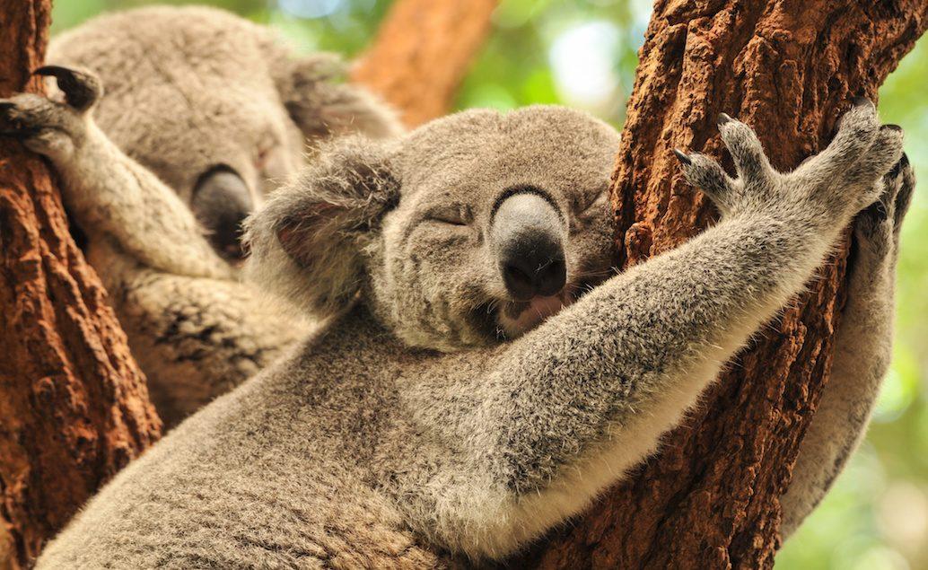 Zájezd Příroda Austrálie a Tasmánie