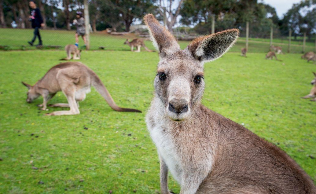 To Nej z Austrálie a Nového Zélandu