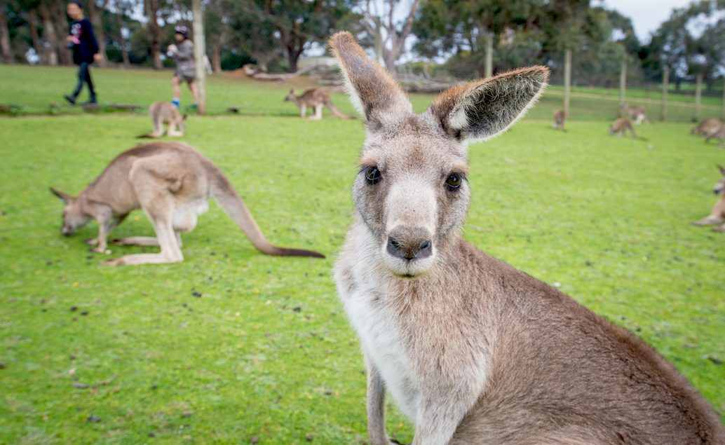 Zájezd Melbourne s výlety do okolí