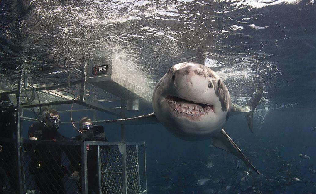 Zájezd Dobrodružství se žralokem bílým