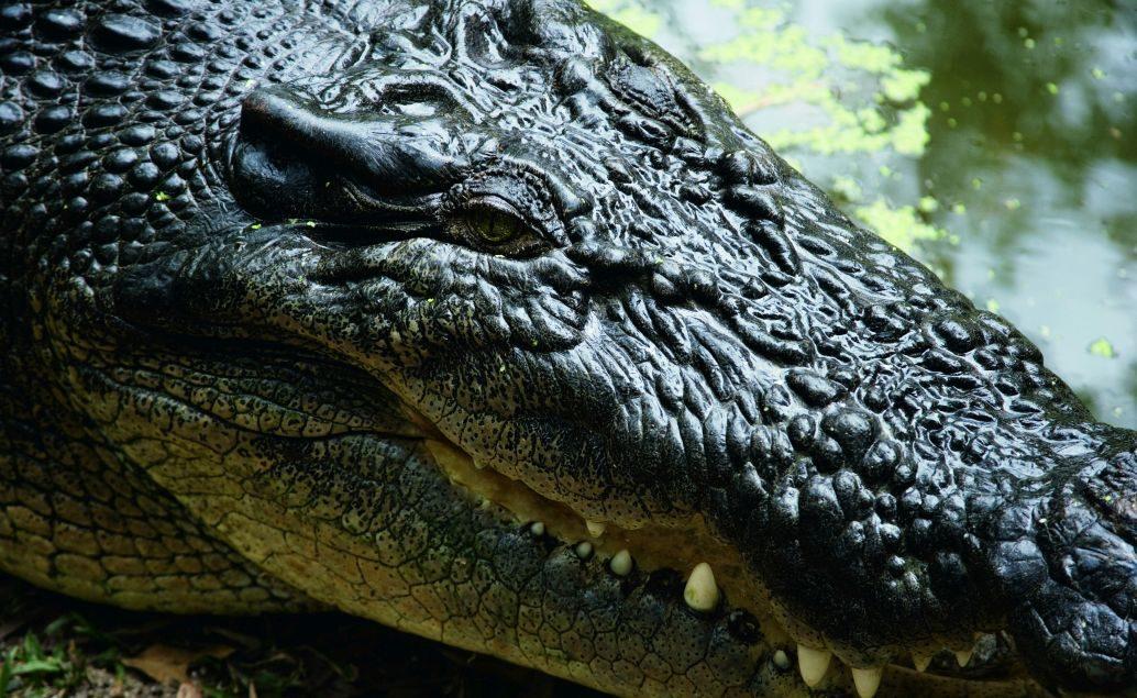 Zájezd Pozorování krokodýlů v přírodě