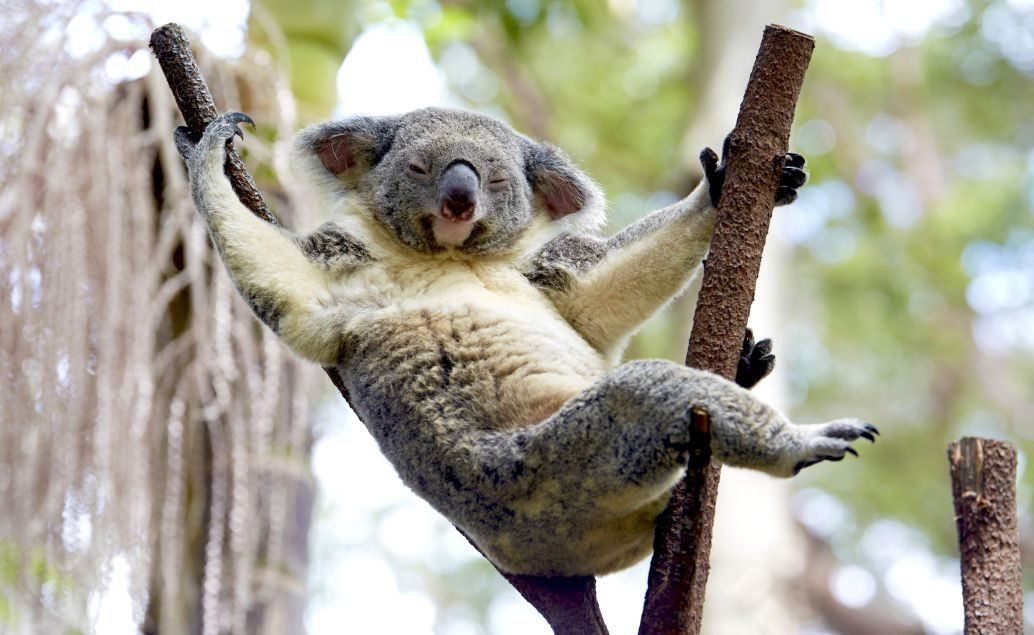 Luxusní pobyt Austrálie