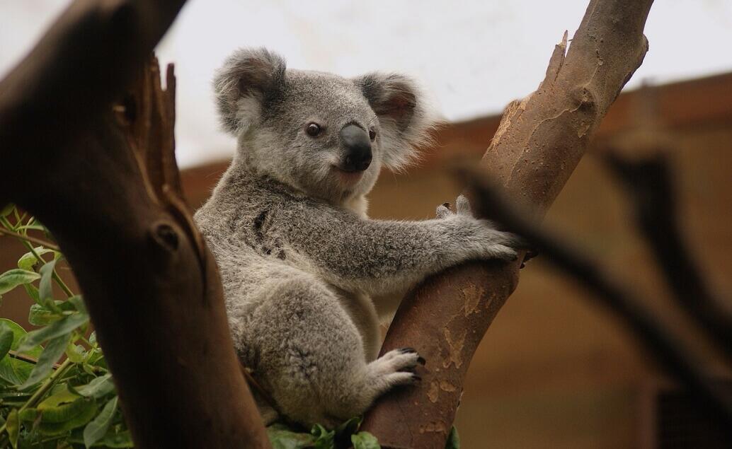 Zájezd Pláže Austrálie koala