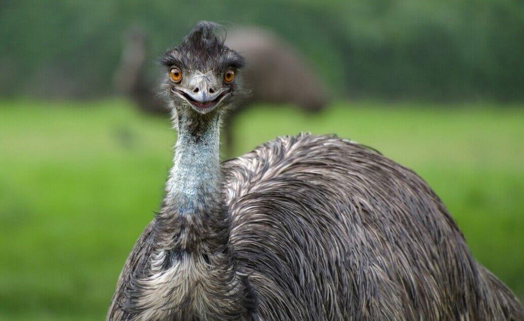 Zájezd Pláže Austrálie emu