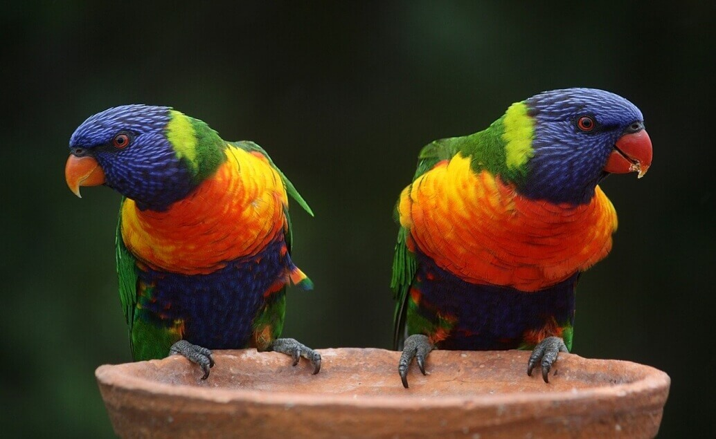 Zájezd Pláže Austrálie papoušek