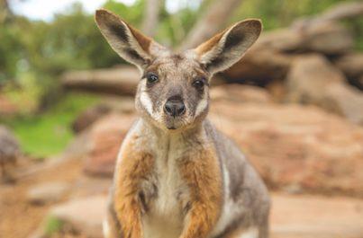 Austrálie, Nový Zéland a Fidži INDIVIDUÁLNĚ