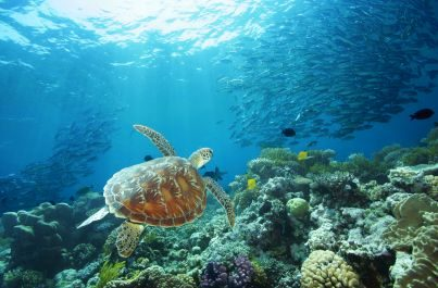 Zájezd tropický sever a Barierový útes